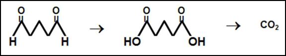 Глутаровый альдегид (Glutaraldehyde) разлагается на Глутаровую кислоту (Glutaric Acid)